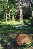 Garenne et tronc d'arbre (2)