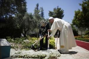 Pape fraçois - plantation d'un olivier