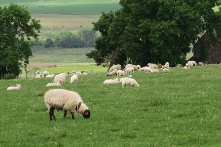 L'attribut alt de cette image est vide, son nom de fichier est Troupeau-de-moutons.jpg.